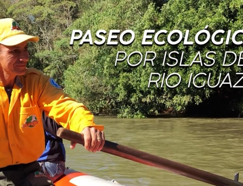 Paseo ecológico por las islas de Río Iguazú